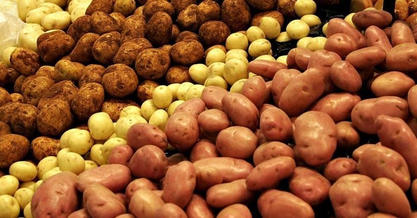 La festa della Patata a Firenze